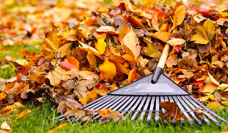 Fall Clean Up | Wilmington NC