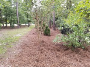 Natural Area Clean Up Wilmington NC