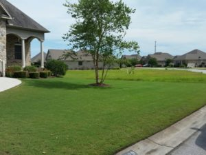 Lawn Mowing Wilmington NC