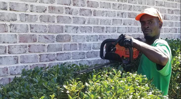 shrub-and-tree-pruning-Wilmington-nc