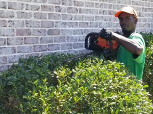 shrub and tree pruning Wilmington nc